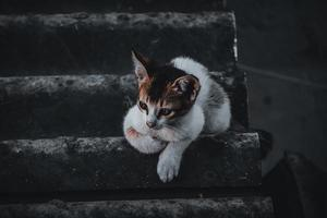 Baby cat sitting on the steps , at home , looking to the camera photo