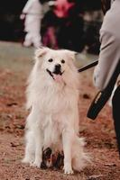 Dog looking to other dogs in park , Dog at Dogs park , pets lover photo