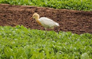 Bird walking on ground , Nature background photo