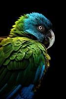 el guacamayo de cabeza azul primolius couloni foto