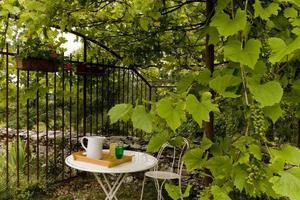 Refreshment under the vine arbor, Lot province, France photo