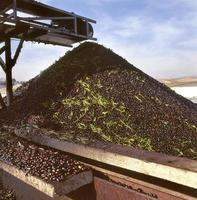 Conveyor belt from olives to the mill, in Toledo, Spain photo