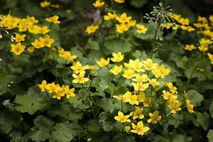cerrar hermosas flores detalles naturaleza foto