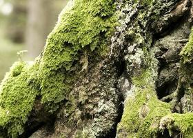 Close up beautiful tree bark texture photo