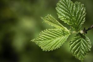 cerrar hojas verdes naturaleza foto