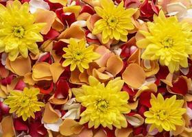 plano laicos bellamente florecidos coloridas flores rosas foto