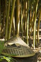 bosque de bambú verde tropical. bosque de bambú botánico foto