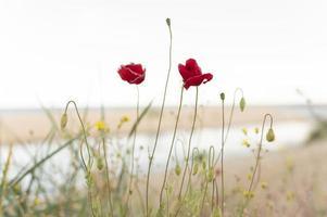 las hermosas flores para decorar foto