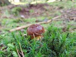setas del suelo de un bosque foto
