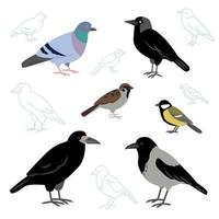 Vector collection of city birds isolated on a white background