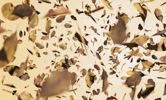 Autumn leaves falling photo
