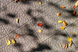 Small autumn leaves fallen to the ground in the shade of plants photo