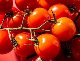 red round Tomatoes Solanum Lycopersicum photo