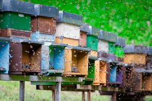 Many bees flying around the beehive. photo