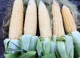 Hairy fresh corn in cobs with knotted green leaves lying photo