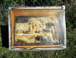 panal de cera de una colmena de abejas llena de miel dorada foto