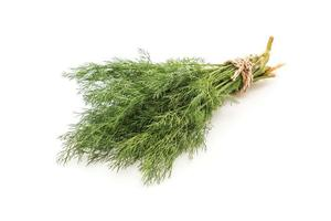 Fresh Dill Weed on white photo