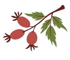 Rosehip branch. Cute twigs with berries. vector