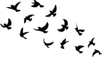 Black Bird Silhouette Against White Background No Sky. vector