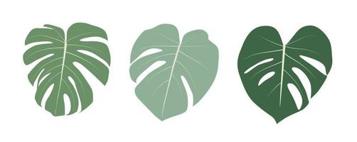 Monstera leaf isolated on white background. Vector Illustration