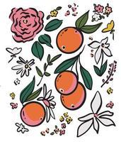 Vector hand-drawn pen drawing Orange fruit flower doodle illustration