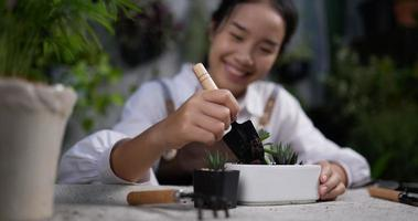 Woman Potting a Succulent video