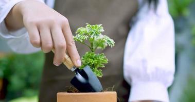 mão plantando uma pequena árvore video