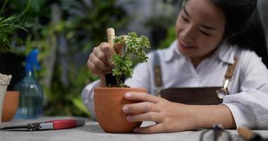 mulher cuidando de uma planta video