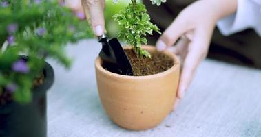 Hand Potting a Small Plant video