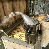 Old grandfather beekeeper works on his own rural apiary photo