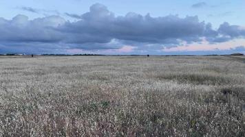 Natural background with a view of the steppe in the evening video