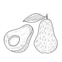 avocado sketch mon vector