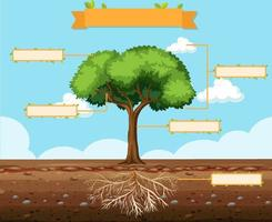 Write parts of a tree worksheet for kids vector