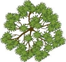 Top view of a tree isolated on white background vector