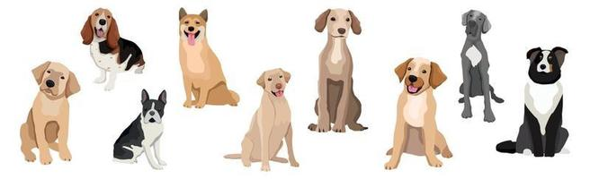 A selection of nine realistic dogs of different breeds vector