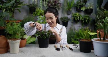 mulher podando uma planta video