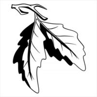 A small twig with two oak leaves. Line style. vector