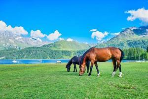 Los caballos pastan en los prados de alta montaña cerca de un lago alpio foto