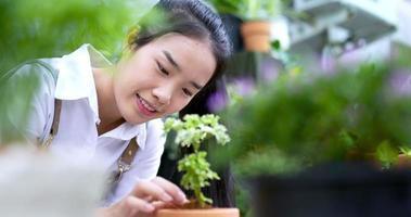 mulher verificando o solo da planta video