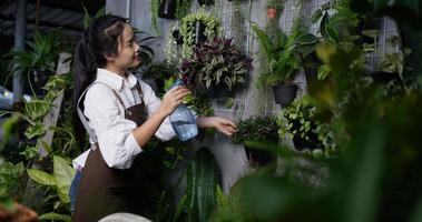 portátil de mulher borrifando água nas plantas video