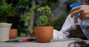 Woman's Hand Spraying Water on A Plant video
