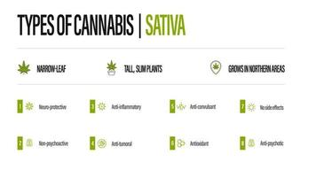 White information poster of Types of cannabis with infographic. Sativa vector