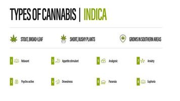 White information poster of Types of cannabis with infographic. Indica vector
