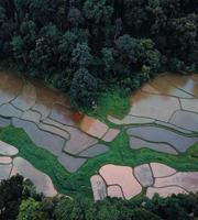 The rice fields in the forest are cultivating. photo