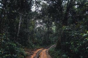 camino de tierra hacia el bosque en la temporada de lluvias tropicales foto