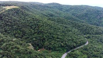 Aerial footage of the forest and the road video