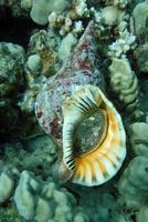 Pretty seashell underwater photo