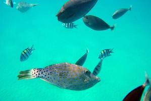 Fish swimming underwater photo