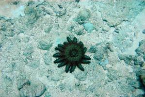Sea plant on the ocean floor photo