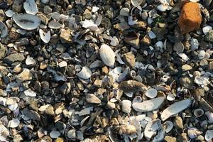 Natural background with lots of seashells photo